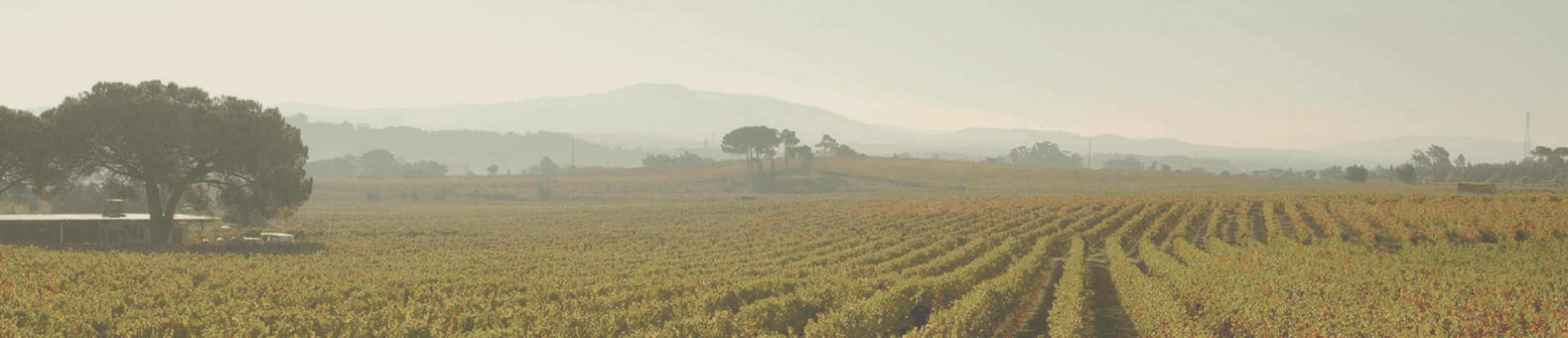 Wines & Winemakers by Saven